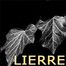 Collection Lierre