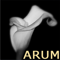 Collection Arum